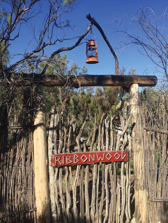 Ribbonwood