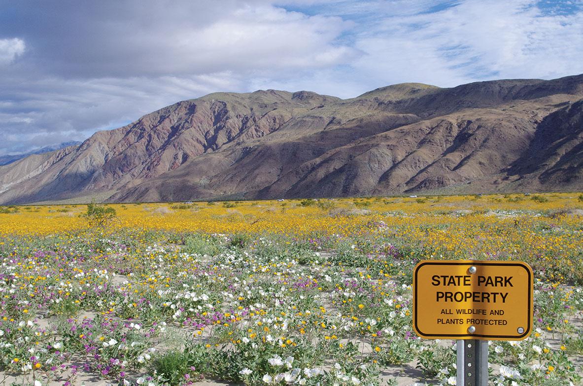 march garden calendar anza borrego state park wildflowers superbloom