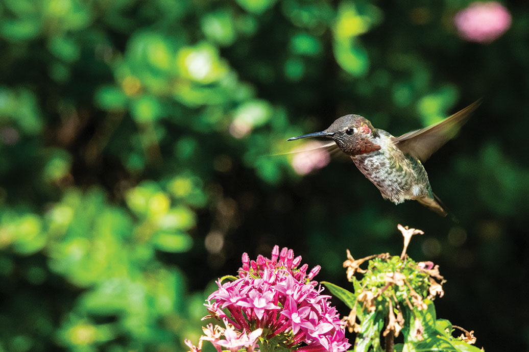 floral garden hummingbird