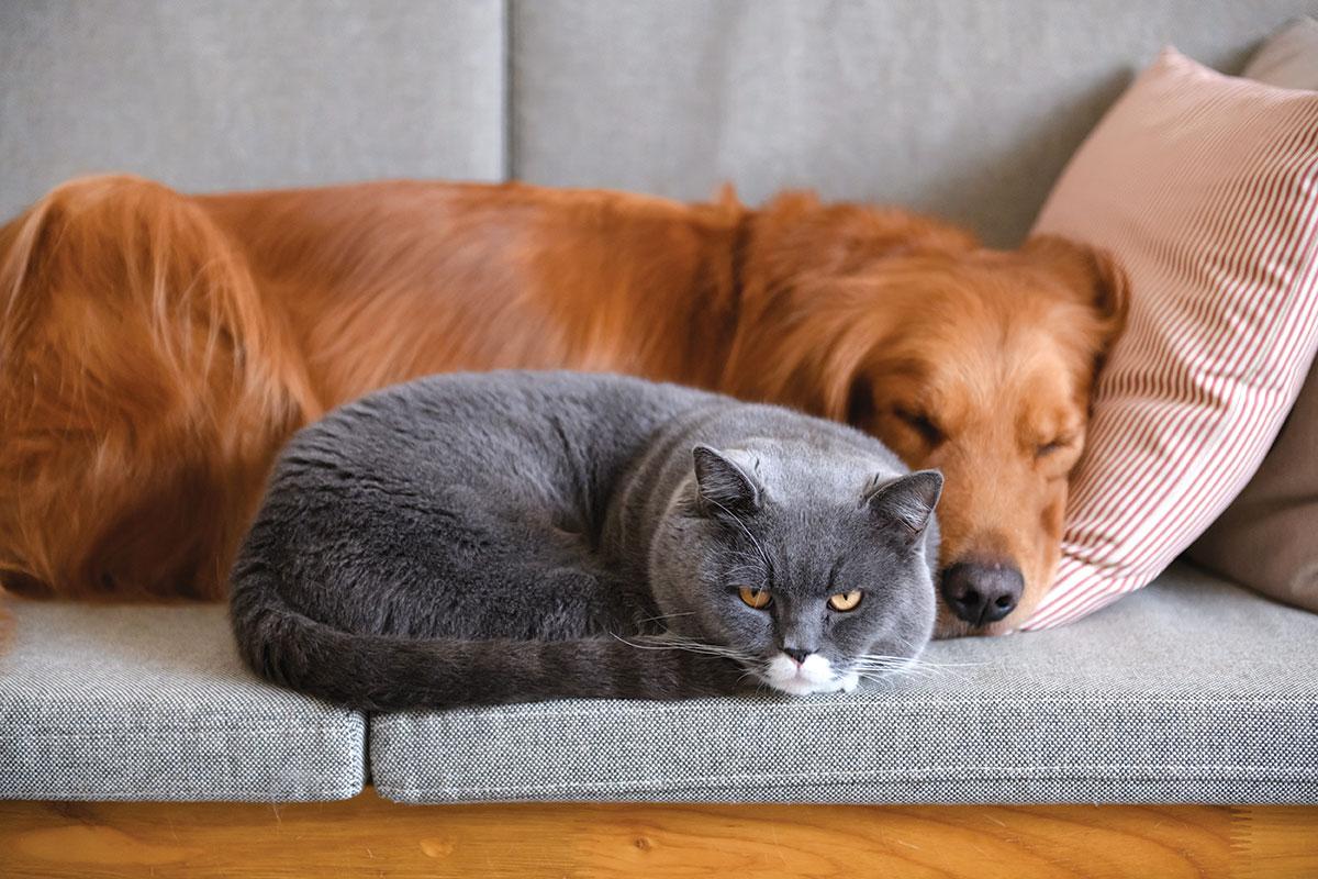 pet furniture solutions