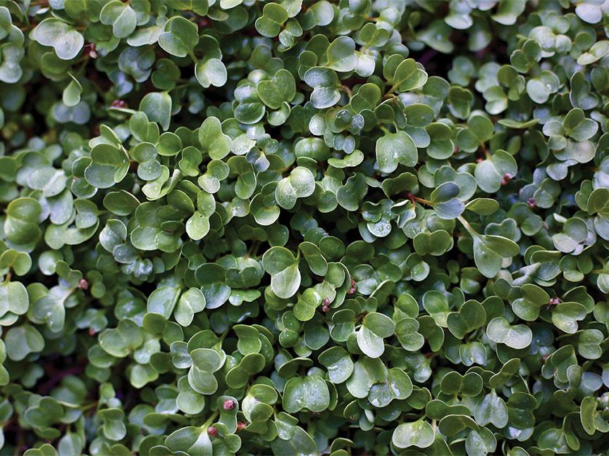 microgreens epic gardening kevin espiritu
