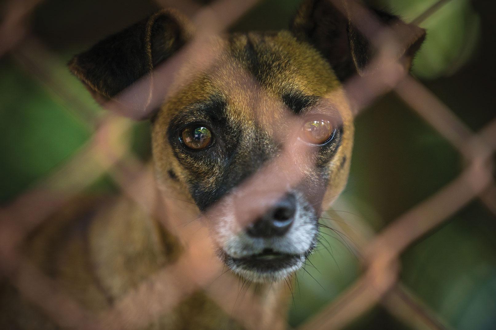 san diego pet charities animal charity donation