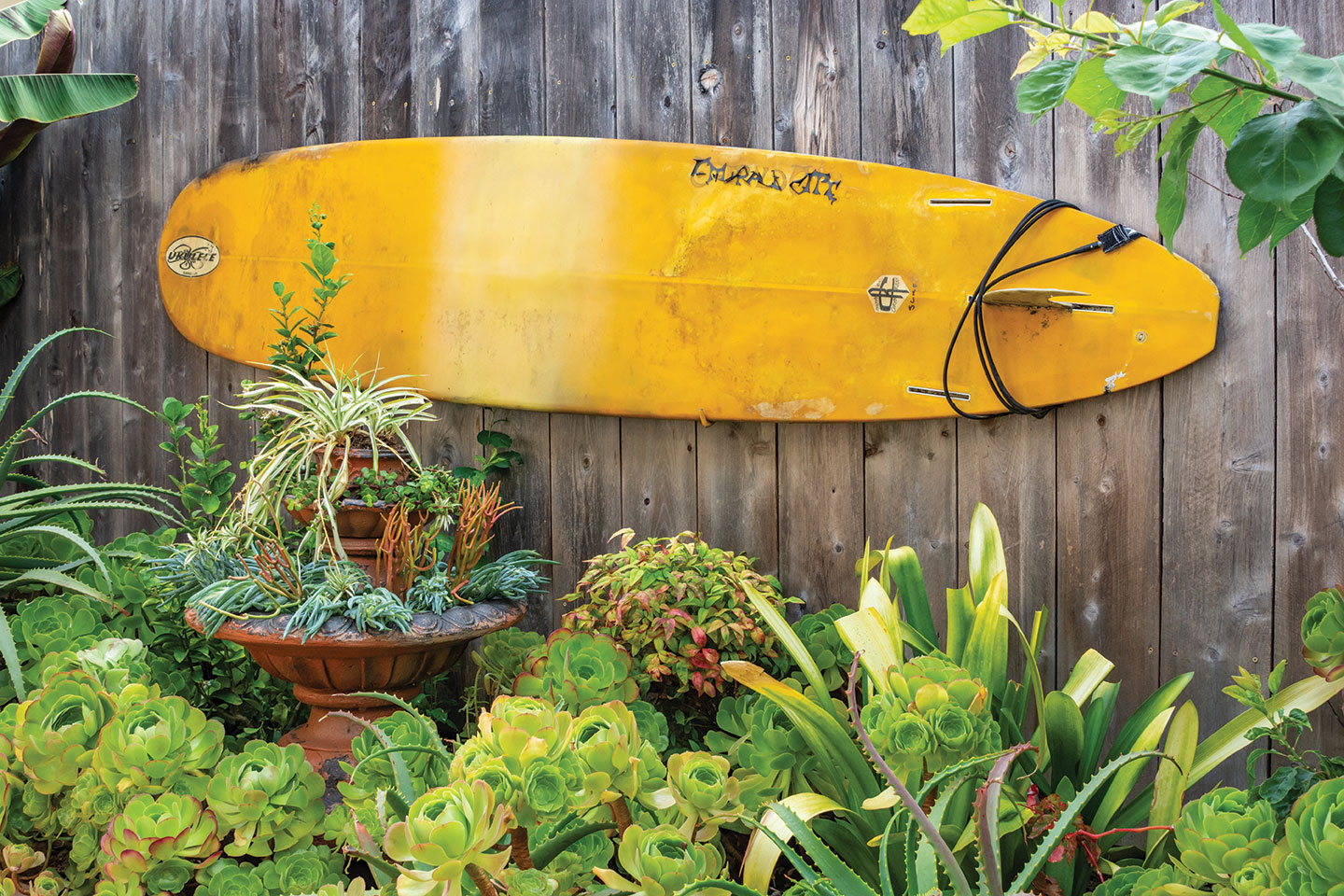 surfboard hung on a wooden fence in an artistic changeable garden in san diego with succulents