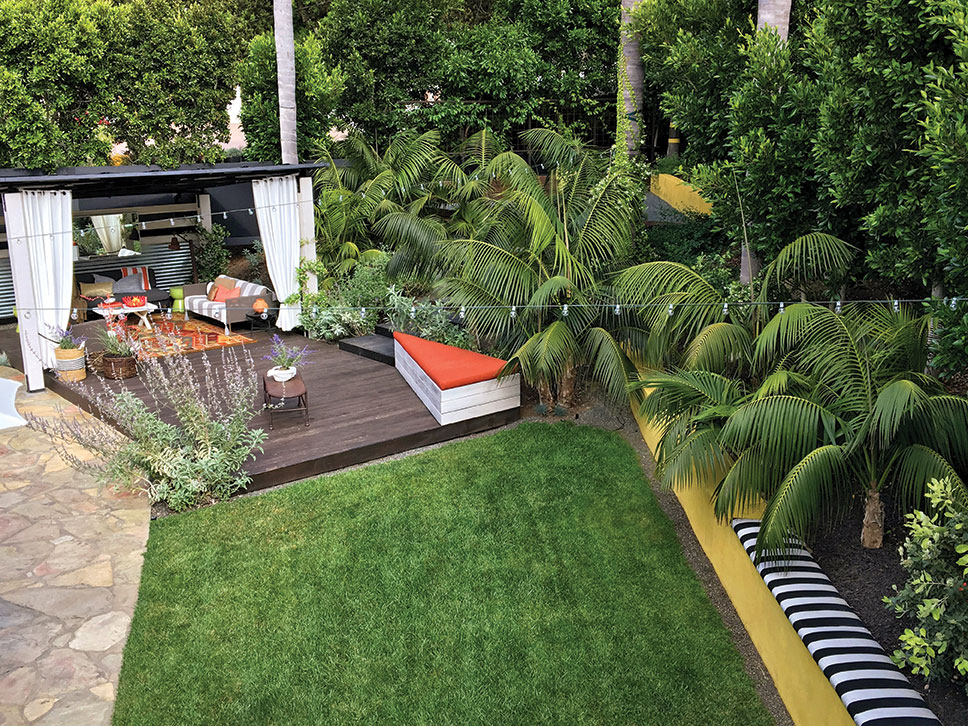 a Burle Yates design pergola room and deck with lawn, a living wall of indian laurel trees and kentia palms