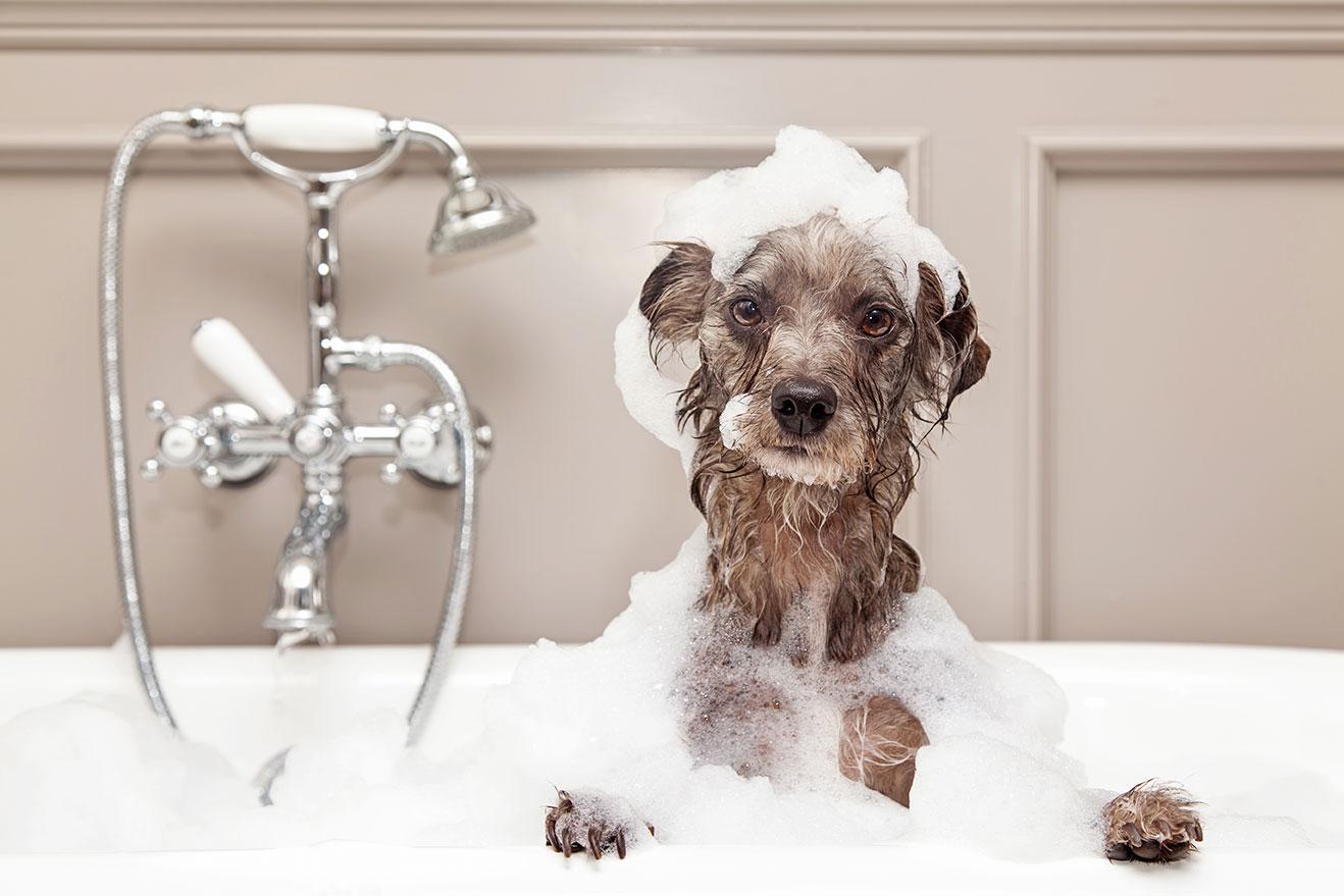 dog grooming san diego