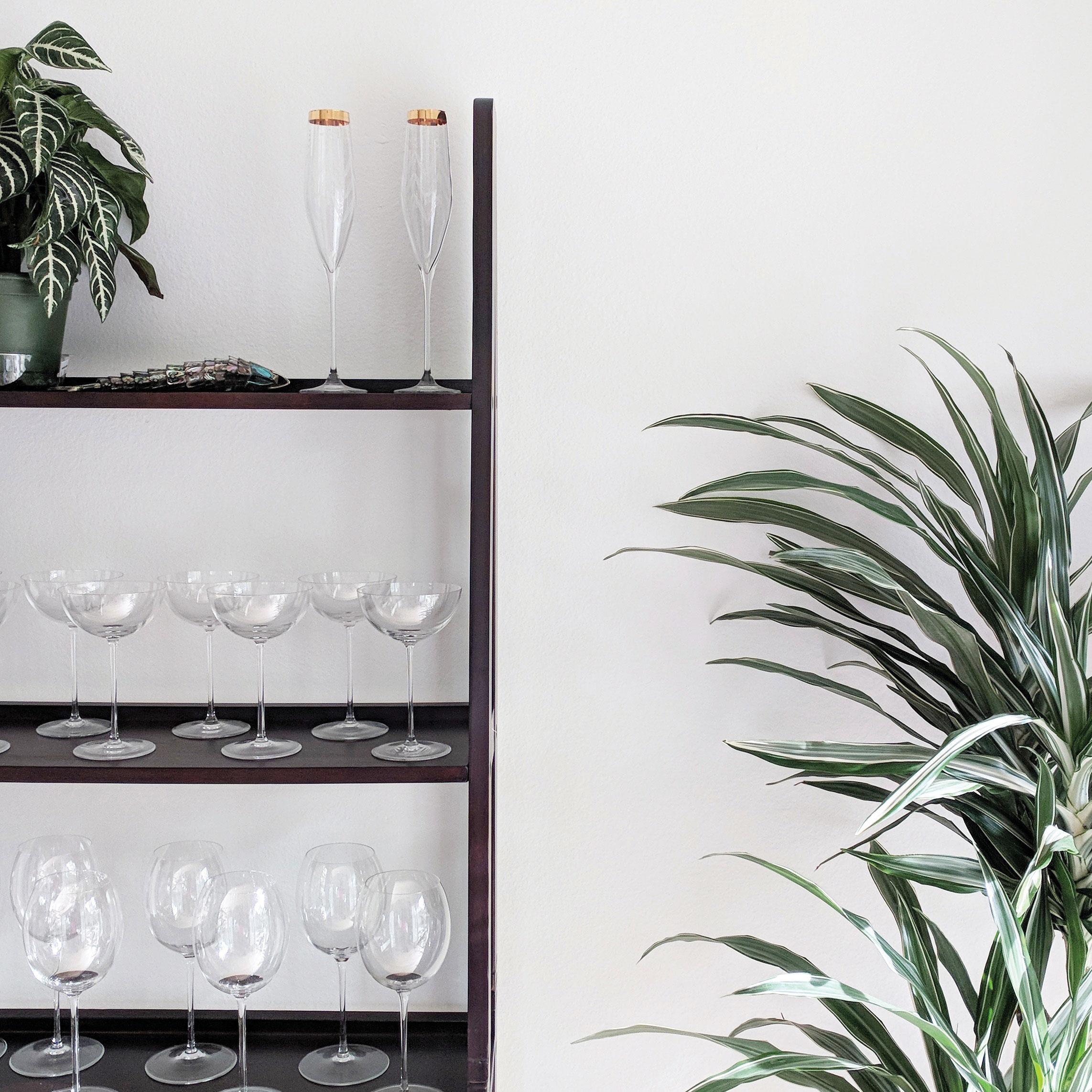kait schulhof san diego sustainability decorate with indoor plants minimal