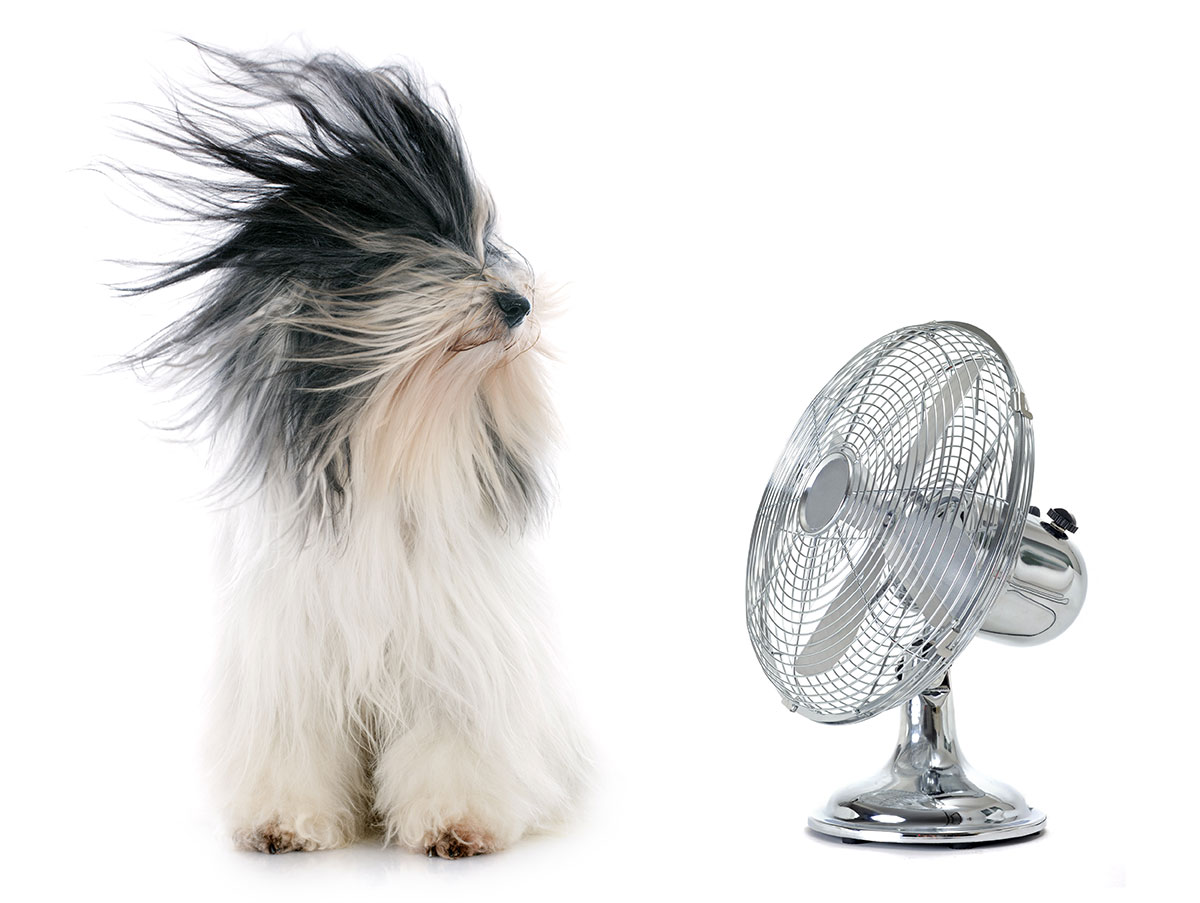 dogs overheating dog pet pets summer hot weather