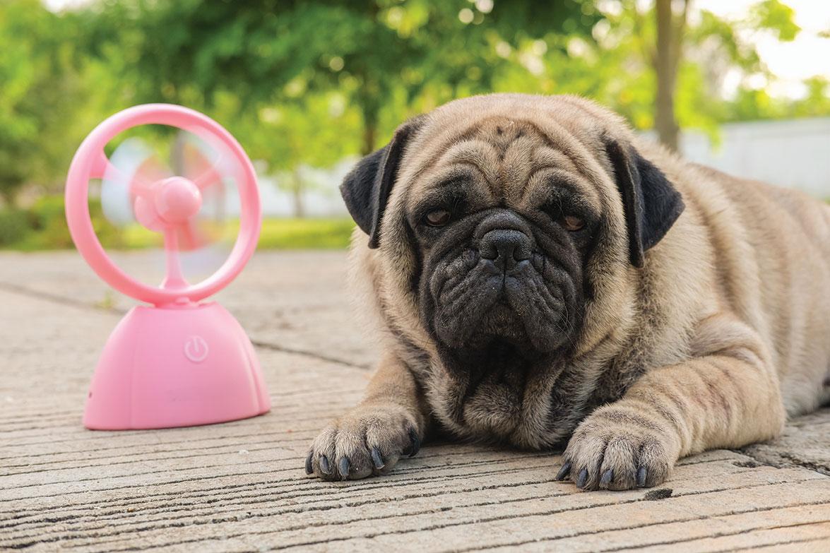 dog overheating san diego