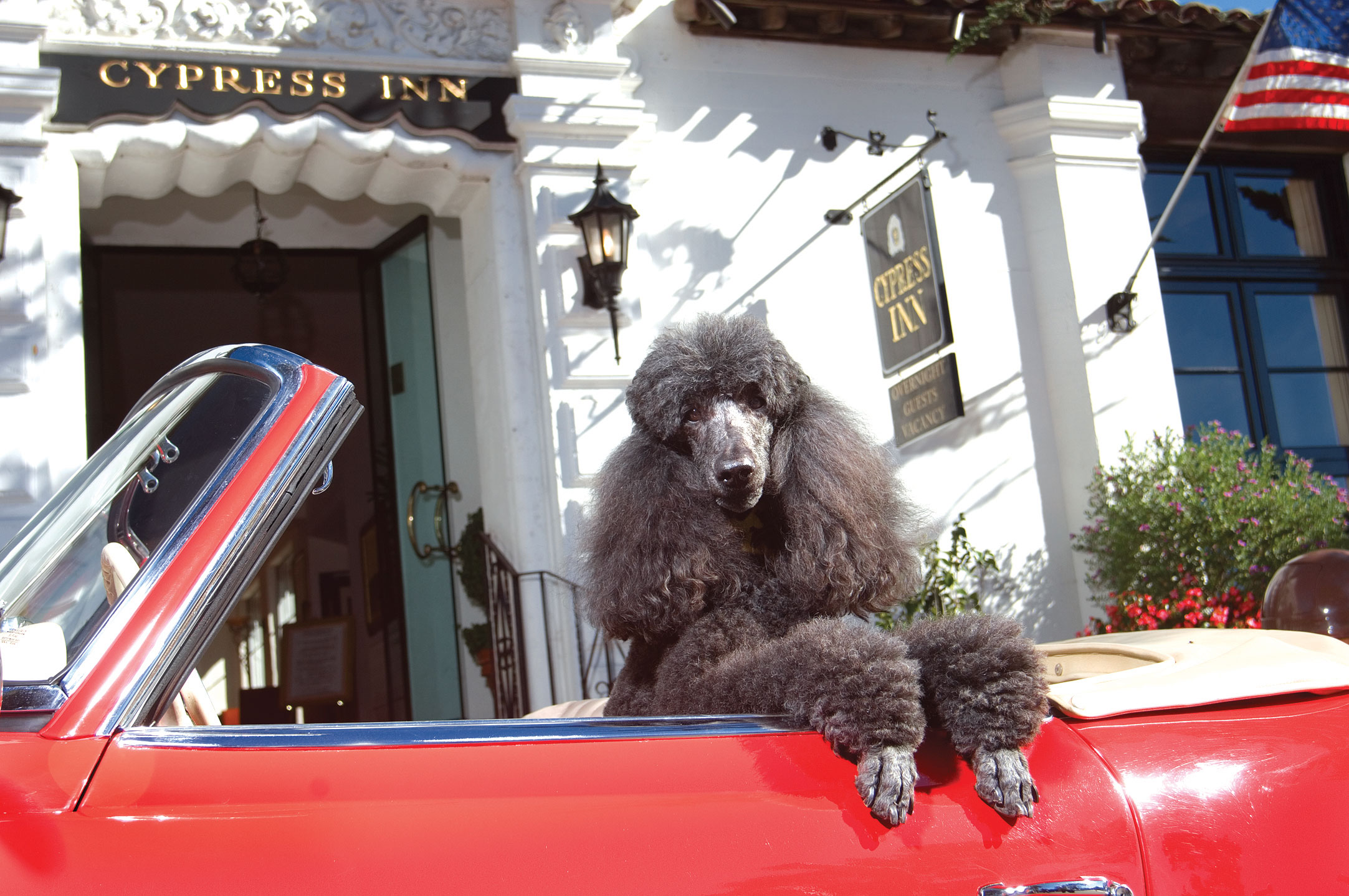 poodle in a convertible carmel california cypress inn