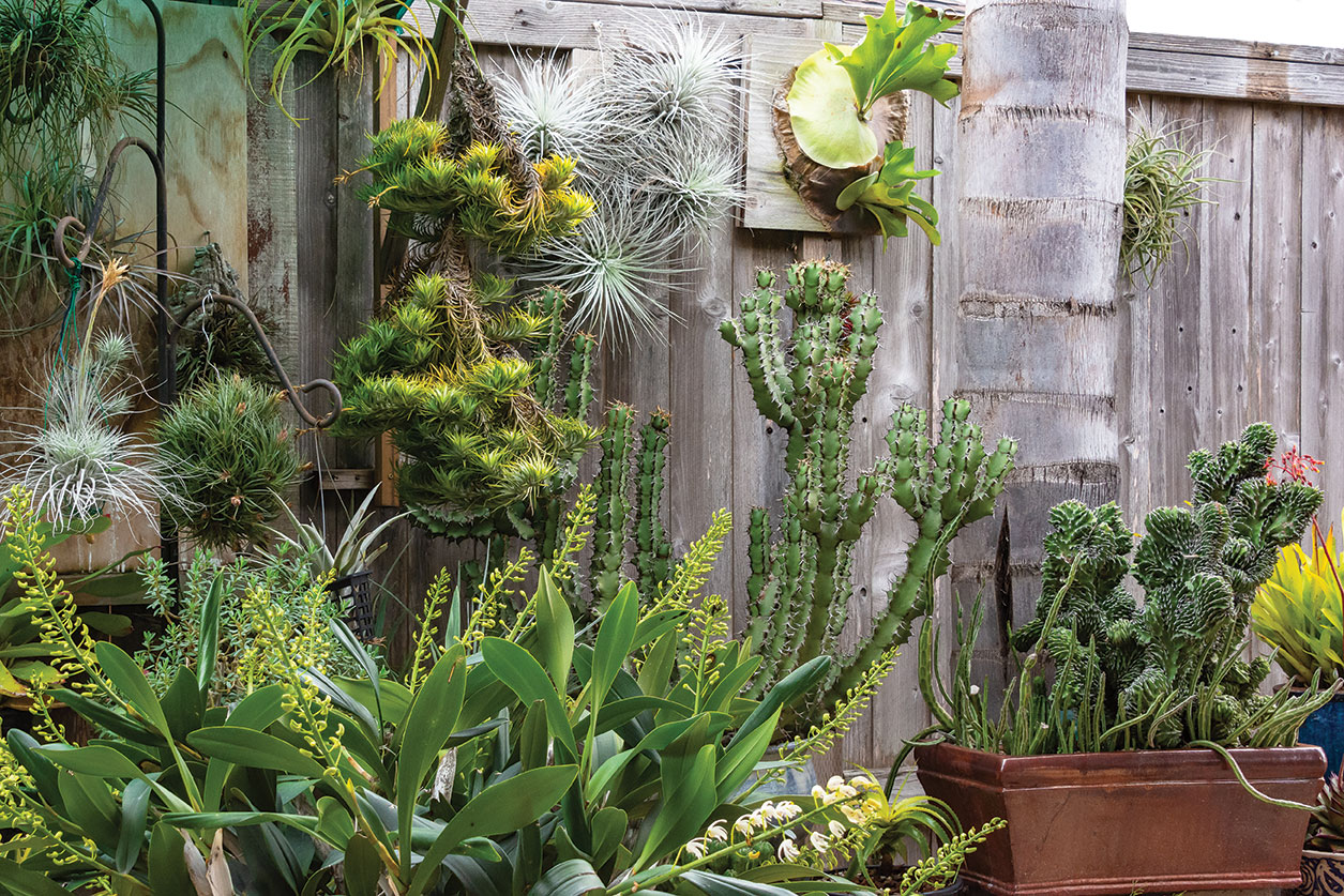 air plants outdoors garden san diego