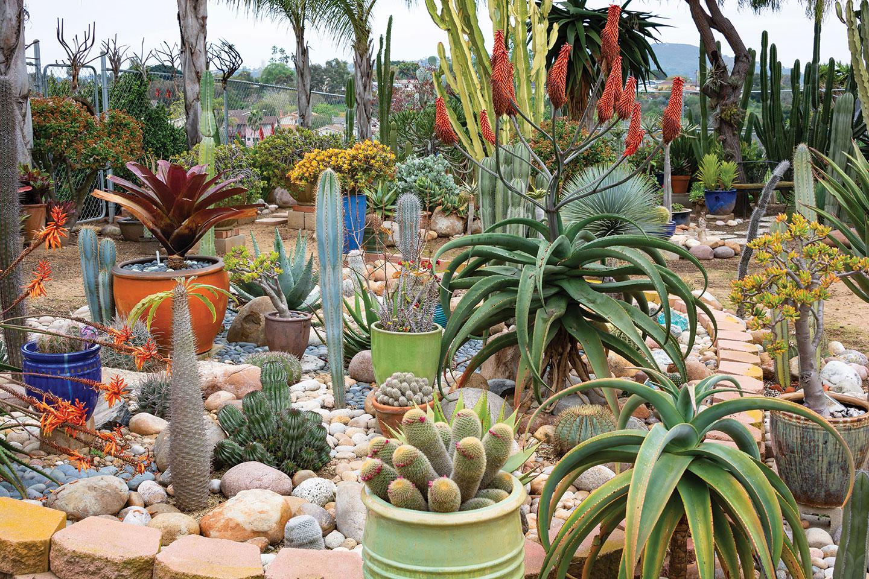 air plants outside