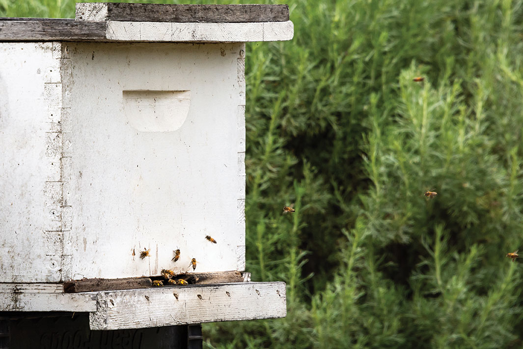 home bee keeping house