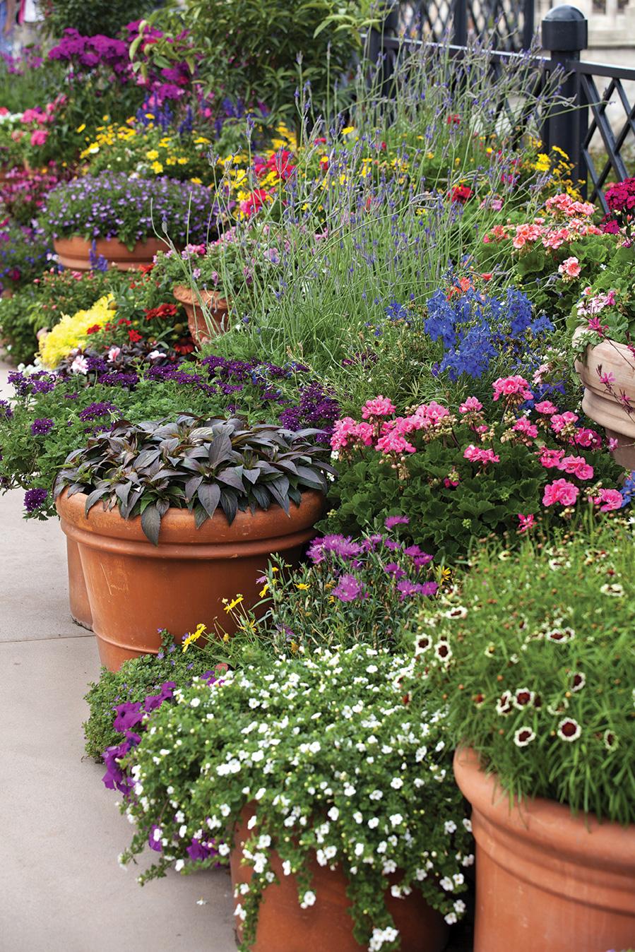 san diego garden august 2019