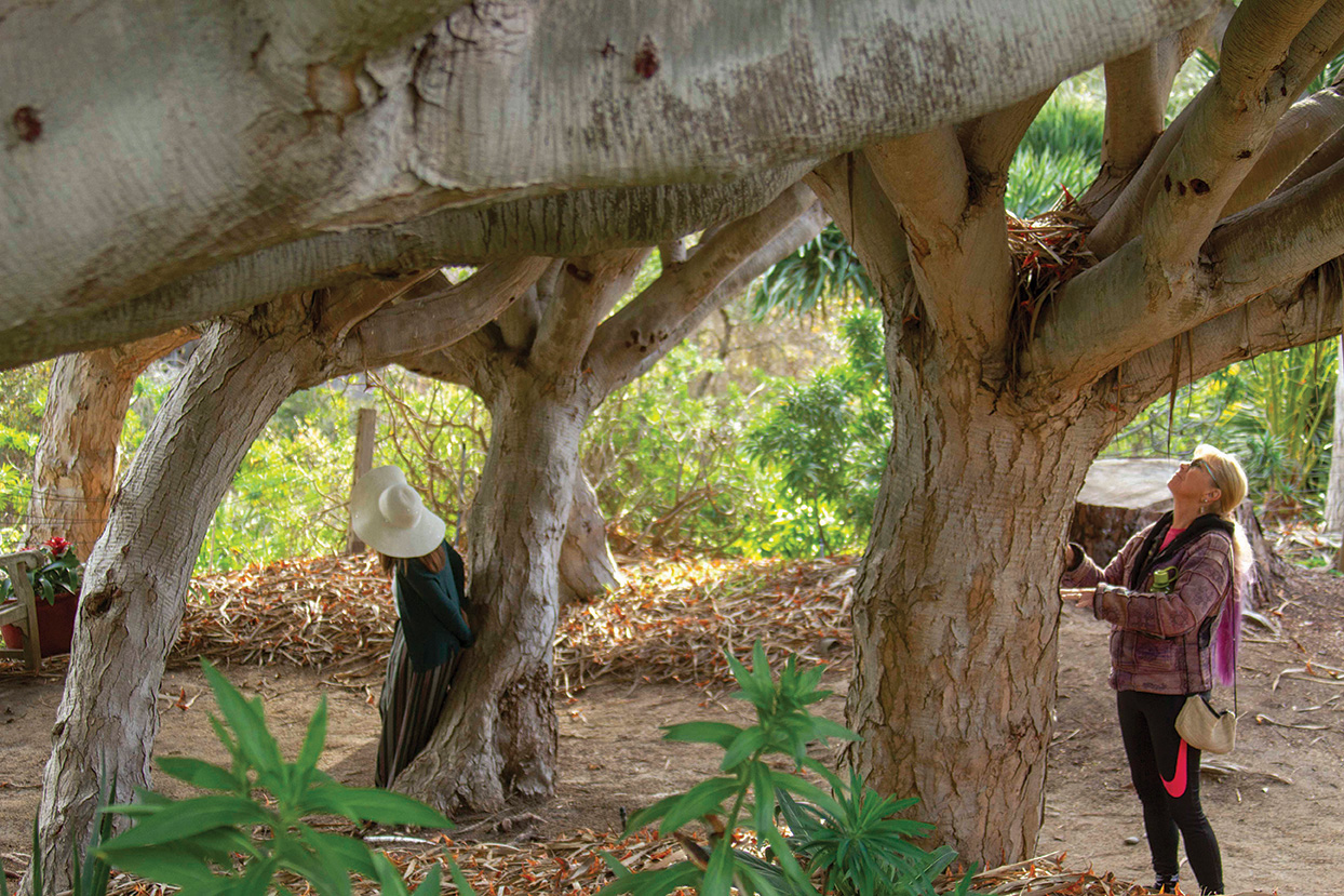 san diego garden events forest nature bathing