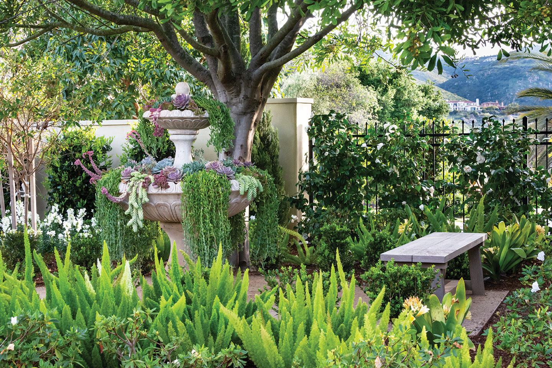 formal garden san diego cottonwood tree