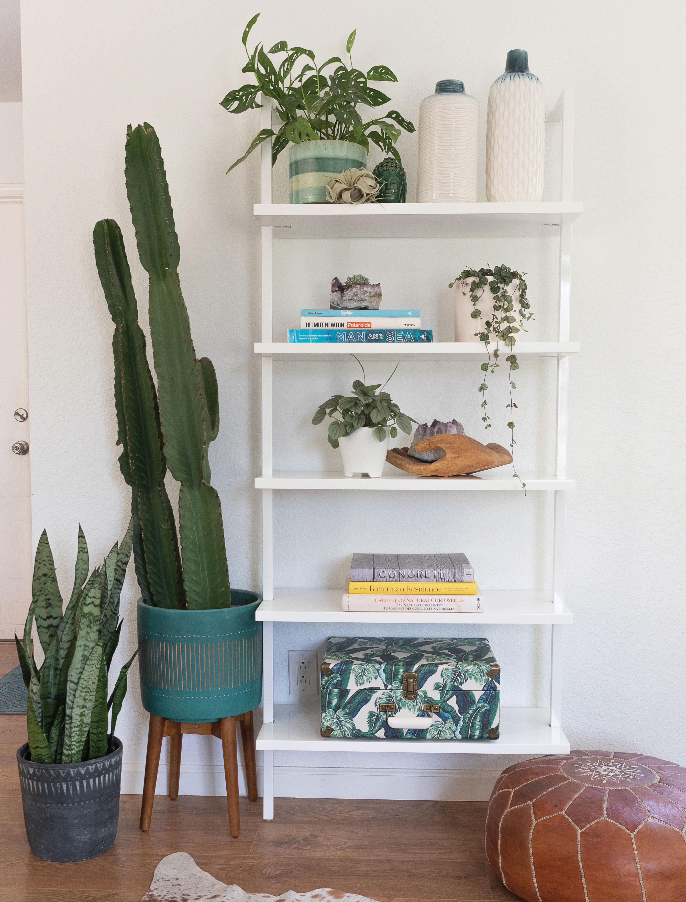 houseplants indoor plants bookshelf