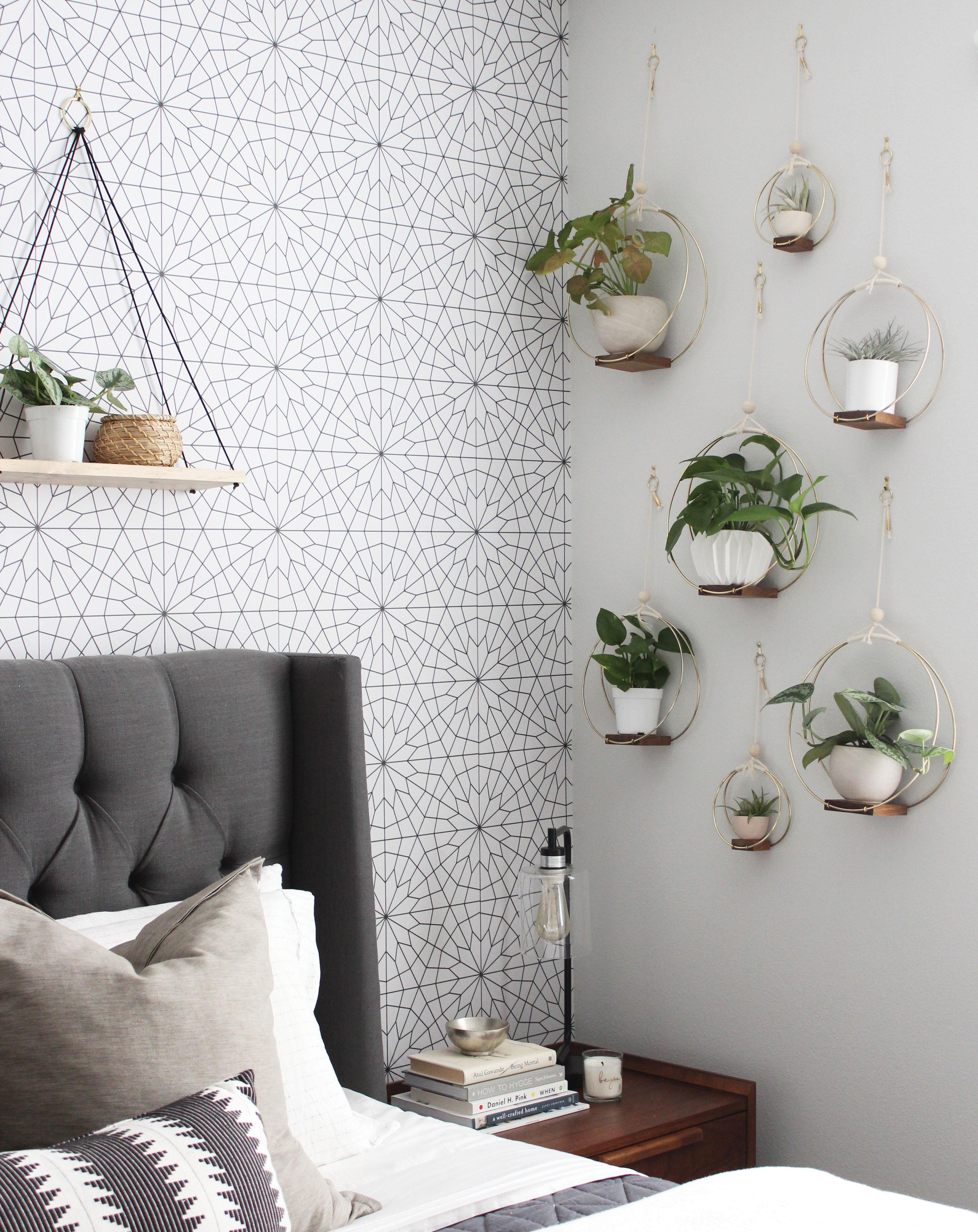 house plants air plants wall display