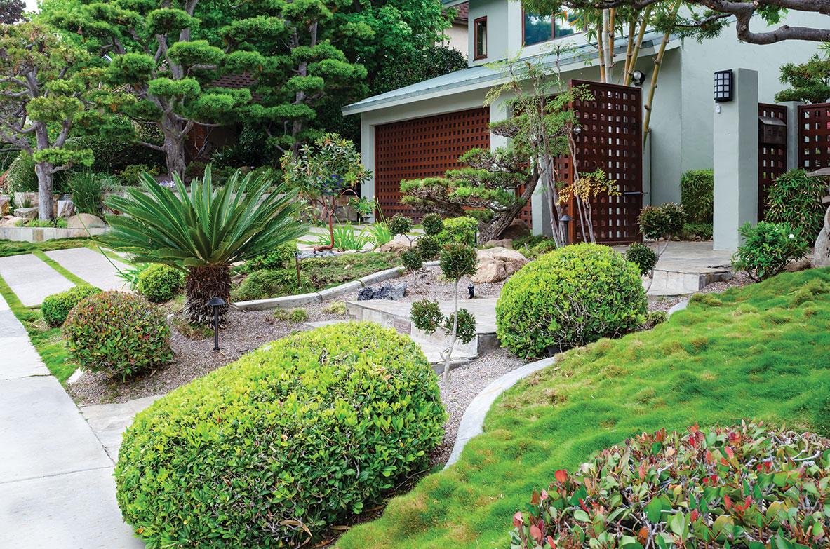 zen landscape san diego japanese garden style podocarpus trees