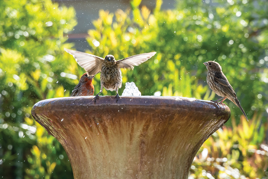 birds bird bath cottage garden