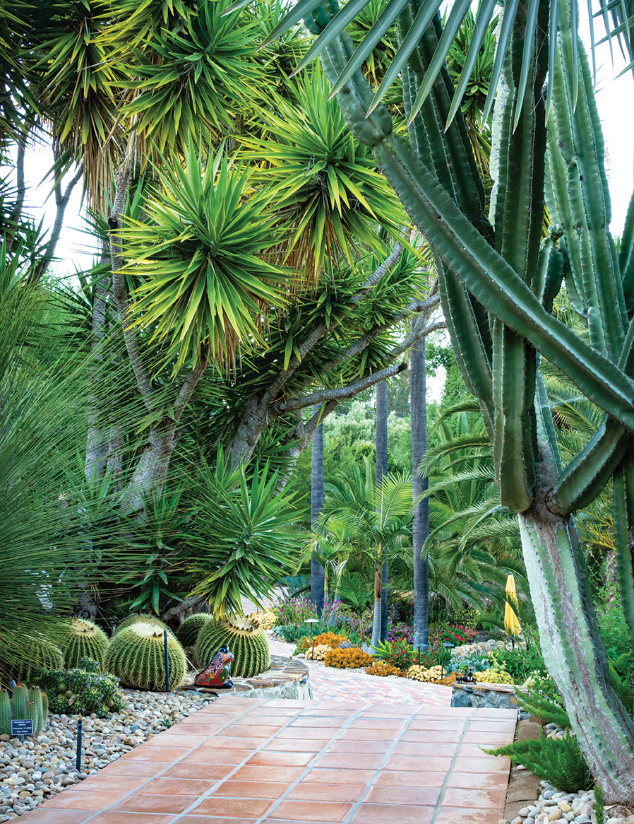 hidden lake ranch peruvian apple cactus giant yucca icy blue bismark palm fronds