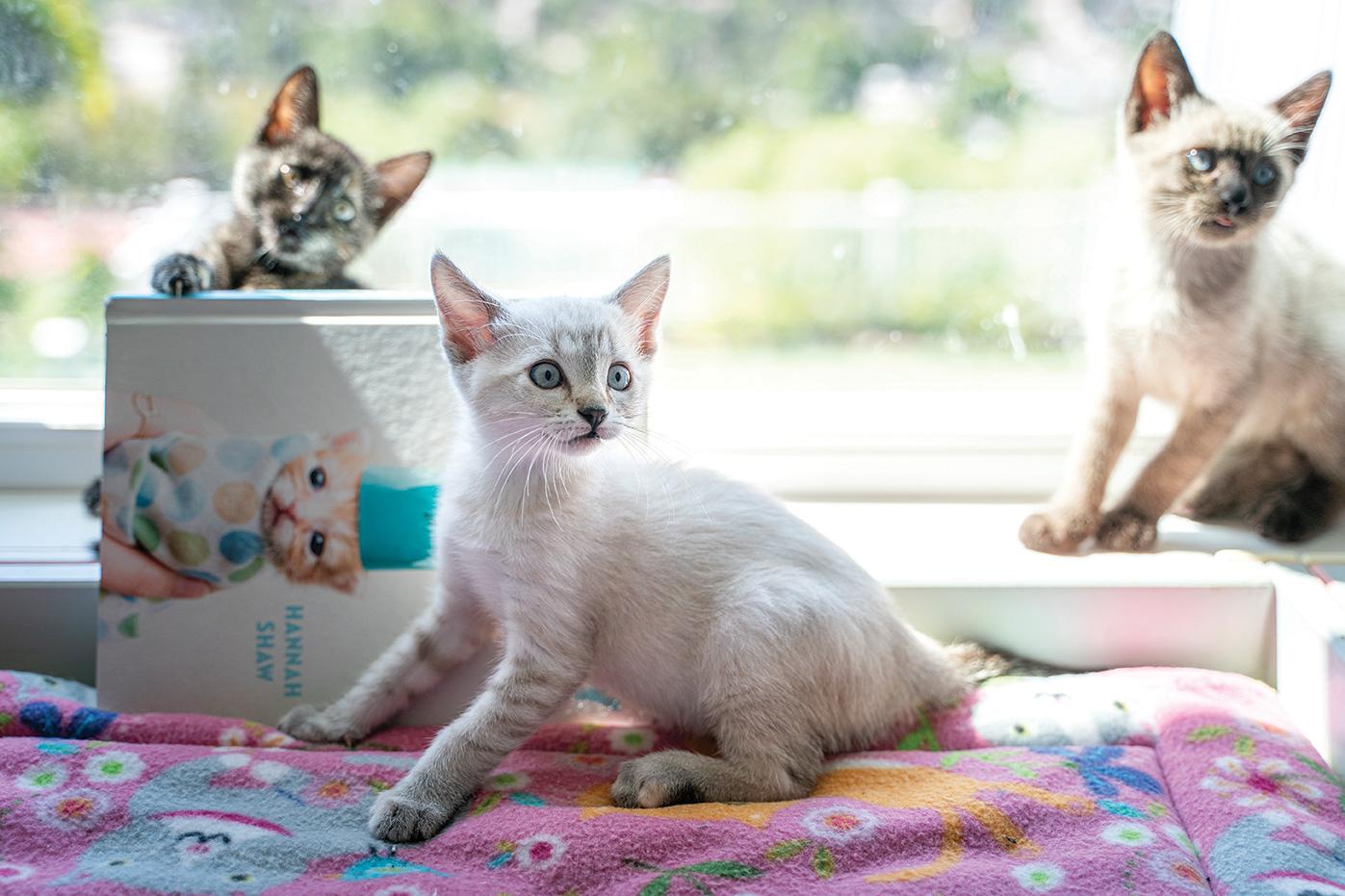 hannah shaw kitten lady san diego
