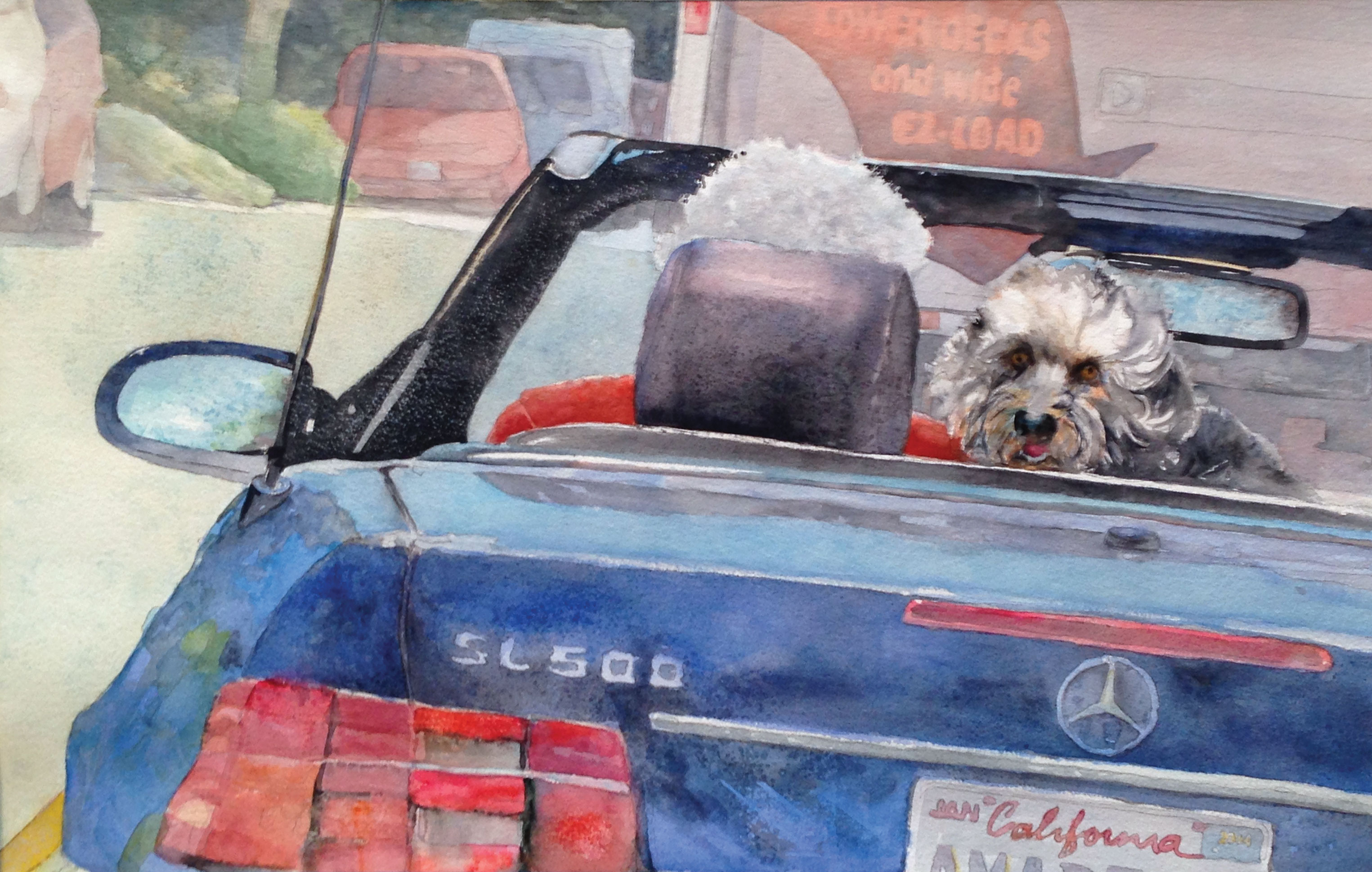 san diego pet artists pet artist cris weatherby dog in a mercedes joy ride top down