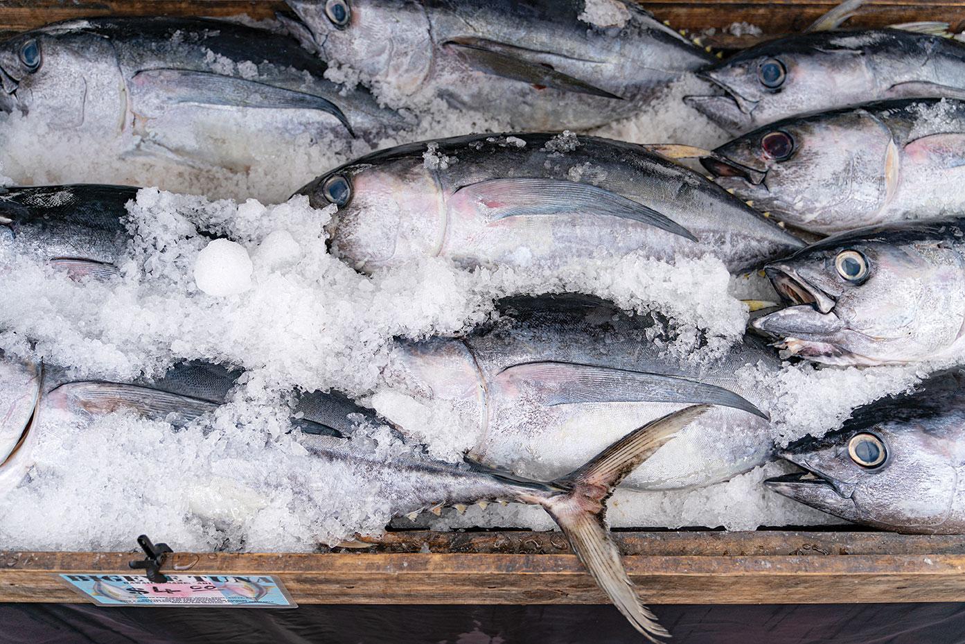 trish watlington tuna harbor dockside market local food downtown san diego