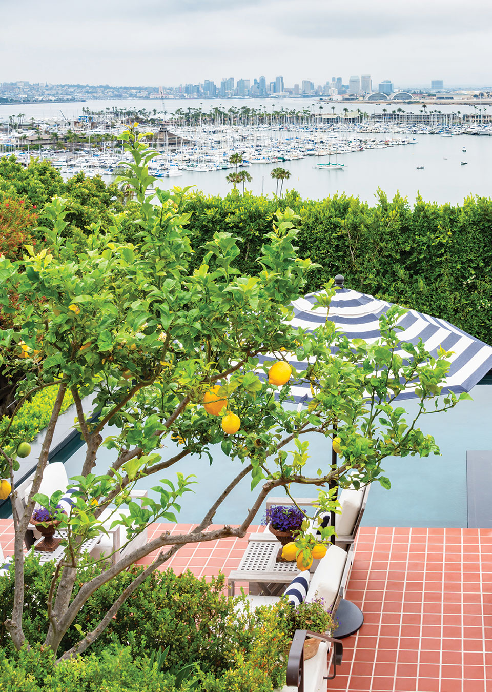 backyard terraces san diego bay downtown view citrus trees eureka lemon