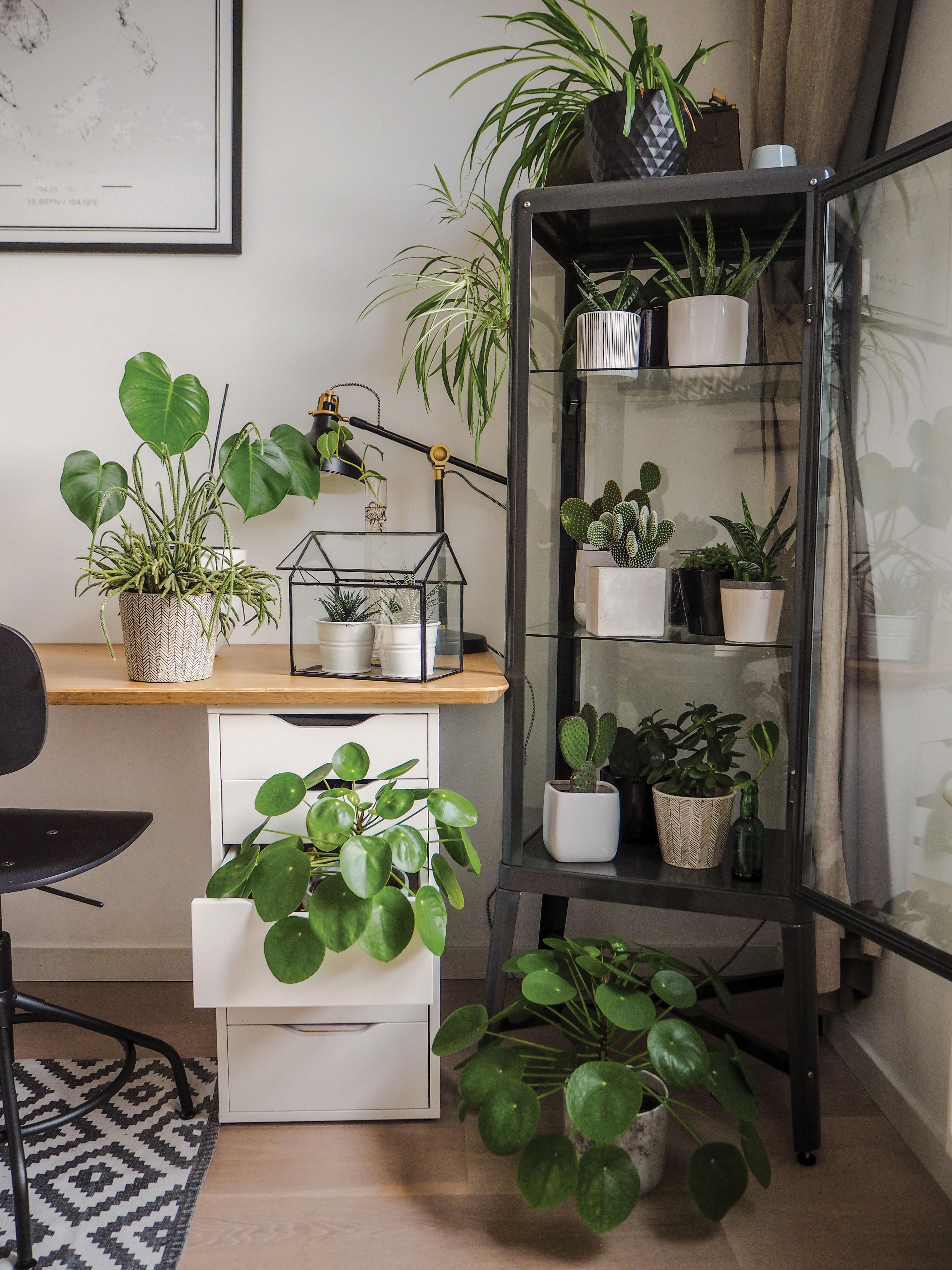 indoor jungle houseplants plants